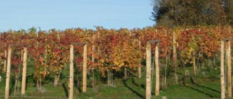 Tern Valley Vineyard photo